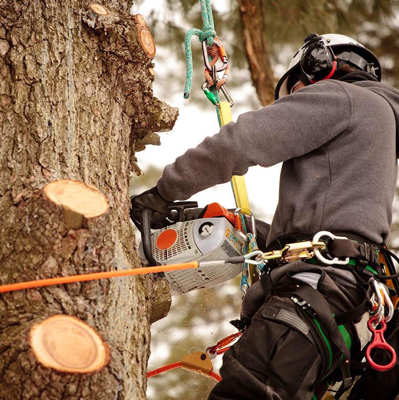 kG_wycinka_drzew